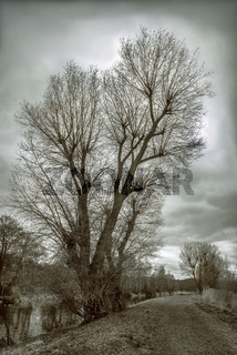 Baumlandschaft im Januar an der Weissen Elster