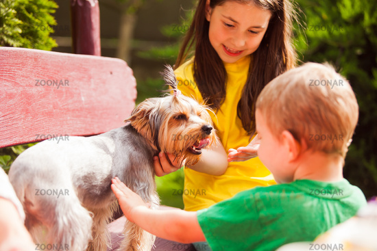 The yorkshire terrier is a favorite of young children