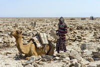 Afar shepherd loading a dromedary with salt slabs, Danakil Depression, Afar Region, Ethiopia