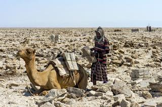 Afar Hirte belädt ein Dromedar mit Salzplatten,Danakil Depression, Afar Region, Äthiopien