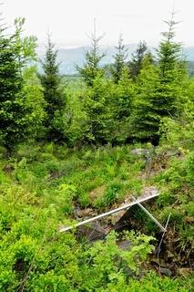 Bühlotquelle mit Bühlertal im Schwarzwald