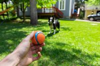 Hand holding ball playing with dog