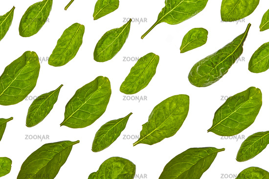 Horizontal pattern from spinach green natural organic leaves on a white background.