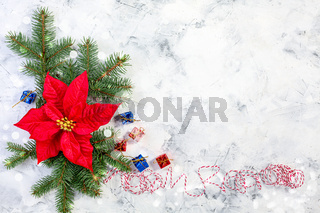 Composition with Christmas flower poinsettia.