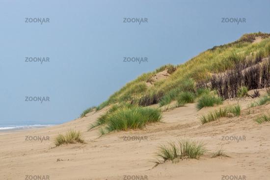 Seaside with dune gras on Borkum