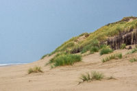 Seaside with dune gras on Borkum