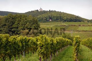 Weinanbau 001. Deutschland