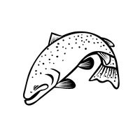Steelhead Columbia River Redband Trout or Coastal Rainbow Trout Jumping Cartoon Black and White