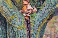 heart-shaped tree trunk