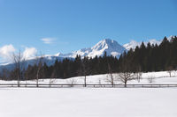 Sunlit snow mountain panorama with evergreen forest and fence in winterl andscape, Seefeld, Austria