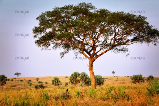 Landscape at Murchison Falls National Park Uganda