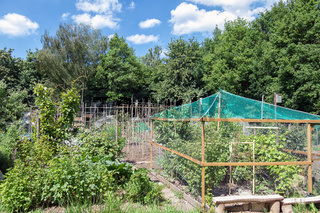 Dutch allotment garden with bean stakes