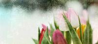 tulpen pastell blumen trauer konzept karte