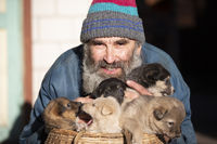 An elderly man with small puppies sitting in a wicker basket. Dog breeder. Puppy seller. Dog kennel.