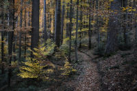 Southern Black Forest in autumn