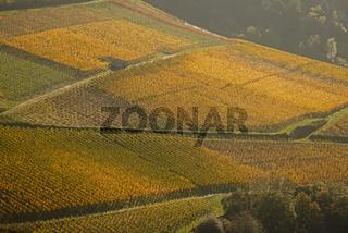 Weinberge im Herbst, Mayschoß, Ahrtal, hier wird Rotwein der Spätburgunder und Portugieser Traube angebaut, Rotweinanbaugebiet, Eifel, Rheinland-Pfalz, Deutschland, Europa