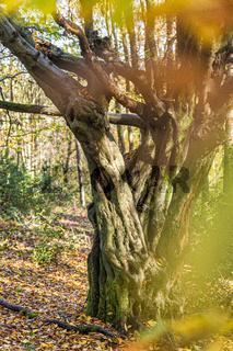 Baum hochkant