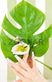 female hands with green leaf and flower
