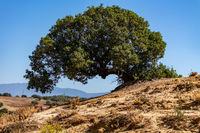 Tree in Andalusia
