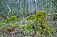 A green mossy tree trunk in the middle of a forest.