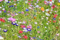 Farbenfrohe Blumenwiese in der Grundfarbe grün mit verschiedenen Wildblumen.