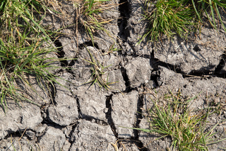 Dampened soil with grass