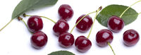 Baner of cherry berries with green leaves and twigs. Beautiful summer red berries.