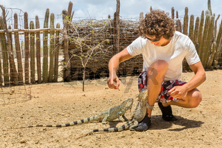 Young man feeding two iguanas on ground