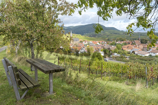 In den Weinbergen oberhalb von Birkweiler, Südpfalz