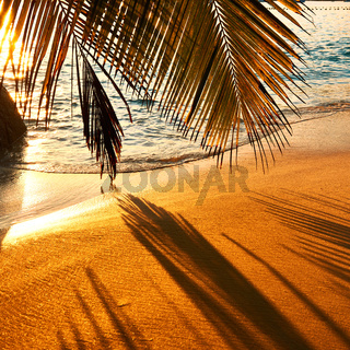 Beautiful sunset at Seychelles beach with palm tree shadow