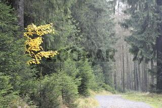 Okertal im Herbst