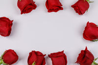 Red roses frame on white