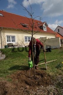 Baum angießen