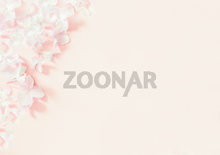 soft pink lilac flowers on pastel pink background