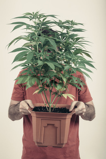 Man holding Cannabis pot