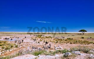 Landschaft im Etosha-Nationalpark nah der Pfanne, Namibia | Landscape at Etosha National Park near Etosha pan, Namibia