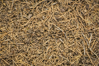 closeup background and texture of forest floor