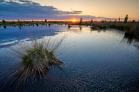 sunset peat bog in the summer