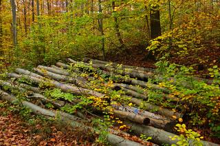 Brennholzpolter im Herbstwald