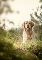 Labrador Outdoors