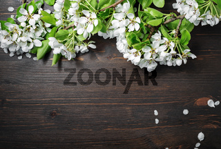 Wood background, spring flowers