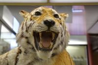 Zoological Museum named after Lomonosov exhibit. Moscow, Russia