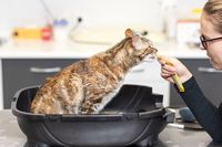 Female Vet Giving a treat To a cat, at animals hospital.