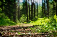 Selective focus on forest floor and grass with blurred sunny path through evergreen forest, Austria