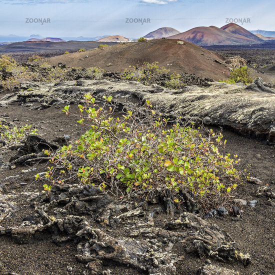 Volcanic Landscape Lanzarote Canary Islands