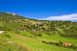 Vineyards on Kalnik mountain slopes
