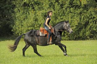 Connemara Pony / Connemara Pony