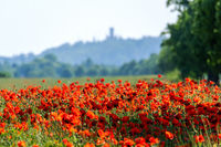 A red poppy field in the sunshine with a castle in the background