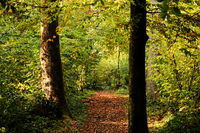 autumn setting in a forrest with sun rays