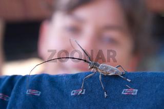 woman look at grey beetle